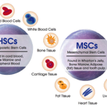 Regenerative Medicine – Stem Cells ( MSC )