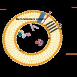 Regenerative Medicine – Exosomes